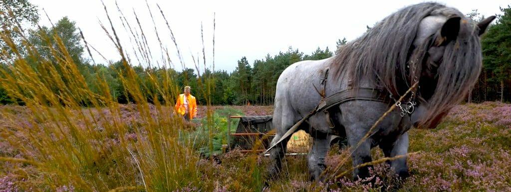 Duurzaam natuurbeheer op de Veluwe