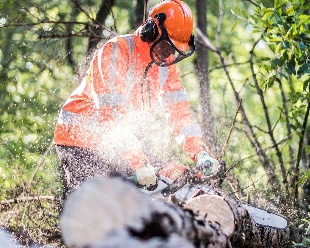 Een assistent boomverzorger aan het werk met een motorkettingzaag.