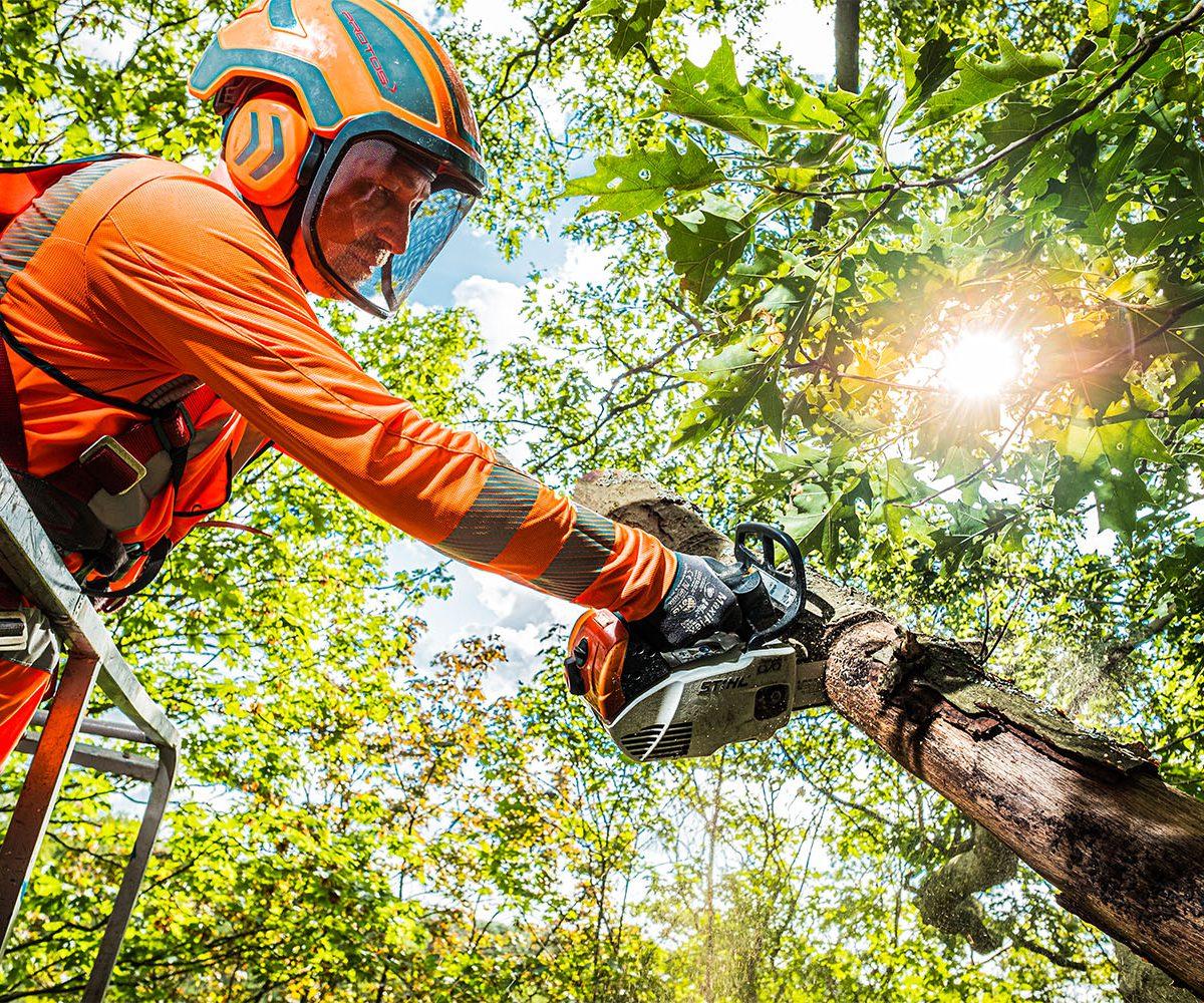 Deelnemer BBL opleiding boomverzorging aan het werk met een motorkettingzaag