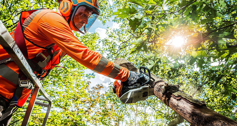 bbl vacatures groningen, boomverzorger aan het werk