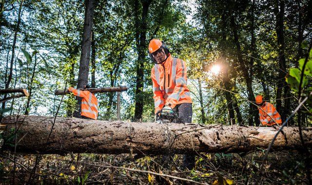 boomverzorgers bezig met gekapte bomen